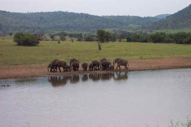 Elephants on Patrol